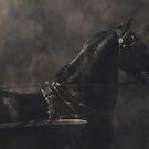 Friesian Stallion by Madcowontherun