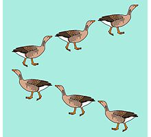 March of Geese Photographic Print