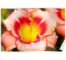 Lily Flower Poster