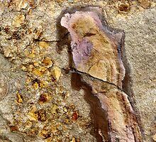 Bird in the rock by Kathie Nichols