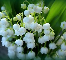 Lily of the Valley by karina5