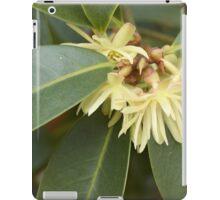 Star Aise (Illicium verum) iPad Case/Skin