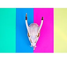 Deer Skull on Striped Background Photographic Print