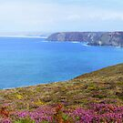 """"""" Pink Heather Coast """" by Richard Couchman"""