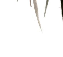 Chinese Shui-mo(水墨)- Grasshopper Sticker
