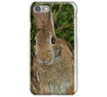 Bunny Looking into the Camera iPhone Case/Skin