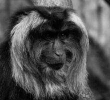 Retrato de mono en B&W Sticker