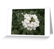 It Will Never Be Spring Greeting Card