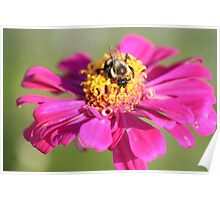 Flower Nnd Bumble Bee  Poster