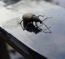 Bug off by Lesleymc77