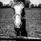 Black and White Horse by Selena Chaplin