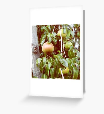 Bear Fruit Greeting Card