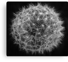 Dark Dandelion  Canvas Print
