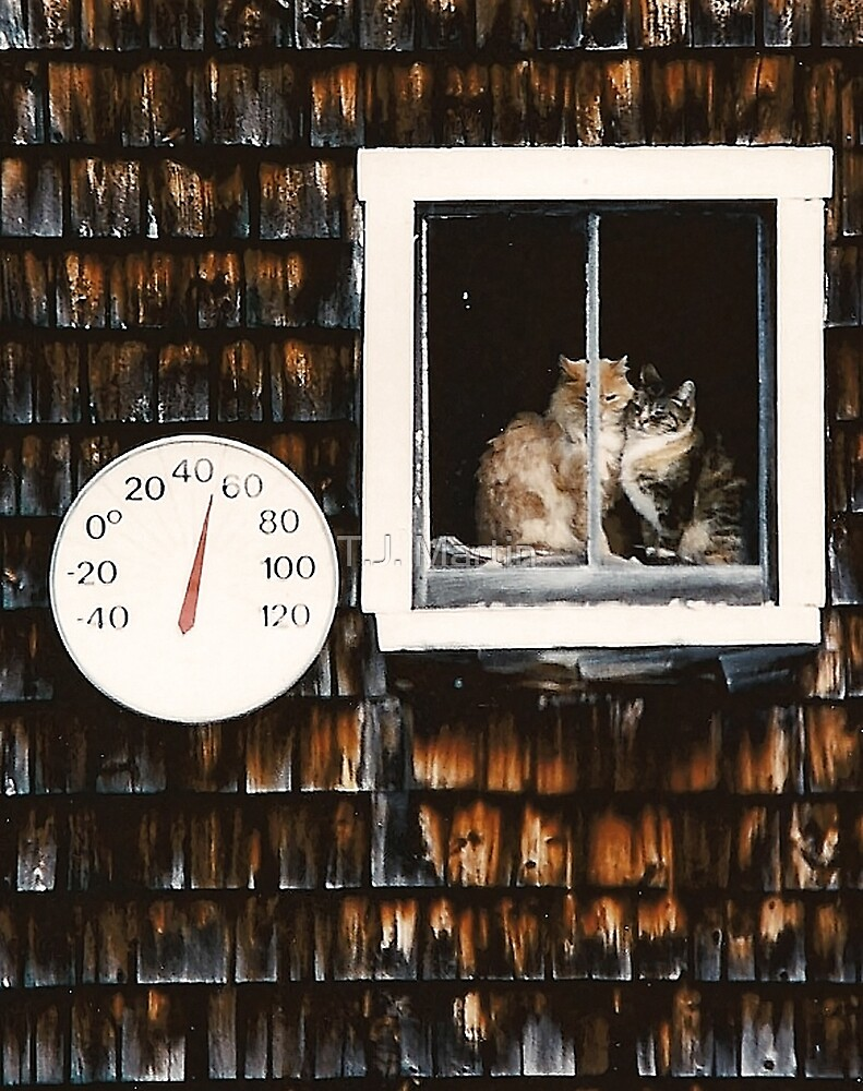 Cats in the Barn Window by T.J. Martin