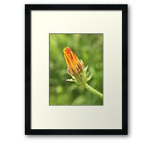 Closed Orange and Yellow Flower Framed Print