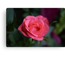 Small Rose Canvas Print