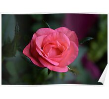 Small Rose Poster