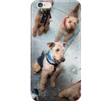 A pack-o-dales iPhone Case/Skin