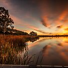 Sun rise on the reeds by Dave  Hartley