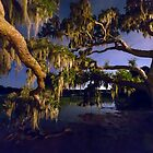 Night Oak on Johns Island by Patrick Brickman