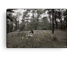 The Daffodils Canvas Print