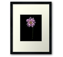 Pink Dahlia on Black Framed Print