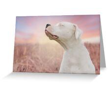DOGO SUNSET Greeting Card