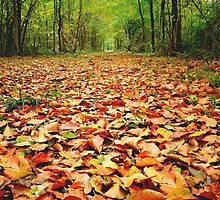 Natures carpet in a local woodland. by David DALES