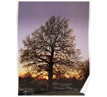 Winter Tree Scene Poster