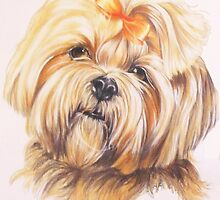 Lhasa Apso by BarbBarcikKeith