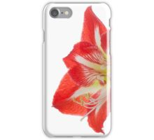 Amaryllis close up. iPhone Case/Skin