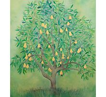 The Pear Tree Photographic Print