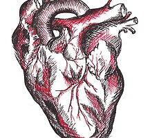 Anatomic Drawing of a Human Heart by mugs-munny