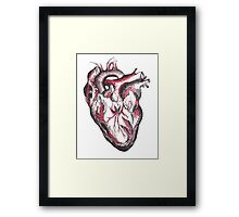 Anatomic Drawing of a Human Heart Framed Print