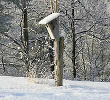 Unoccupied Blue bird houses are unhappy homes by MrMagoo2