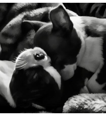 Sleeping Beauties - Boston Terrier Puppies Sticker