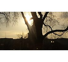 Beautifully Lit Tree in Front of US Capitol Photographic Print