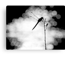 Dragonfly Lit Canvas Print