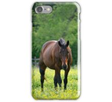A Brown Horse iPhone Case/Skin