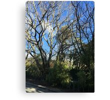 Winter Trees Blue Sky Canvas Print