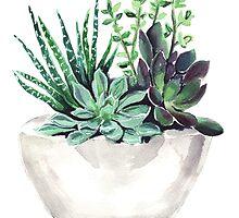 Succulents by bridgetdav