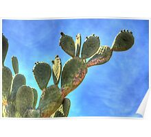 Prickly Pear against Blue Sky Poster