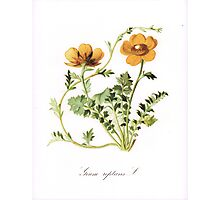 Botanical Prints Photographic Print