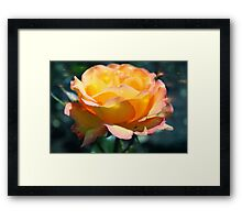 Gorgeous yellow rose flower holiday style. Floral photo art. Framed Print