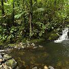 Lourahn Swim - Pohnpei, Micronesia by Alex Zuccarelli