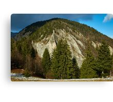 Mountain pine forests Canvas Print