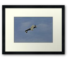 Hawker Sea Fury at the top of the loop Framed Print