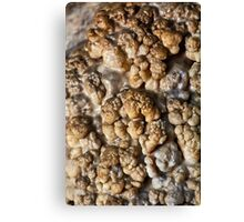Coralloid formations (cave popcorn) Canvas Print
