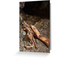 Cave bear fossils closeup Greeting Card