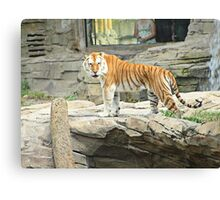 Looking Your Way Canvas Print